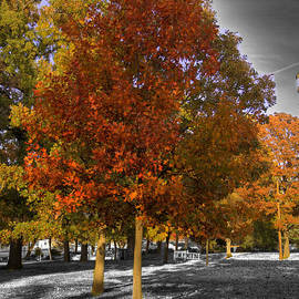 John Straton - Fall Color at Woodward Park 2f
