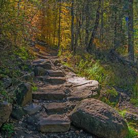 Tam Ryan - Fall Color Pathway