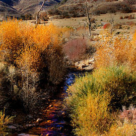 Robert Bales - Fall Colors Along A  Desert Stream