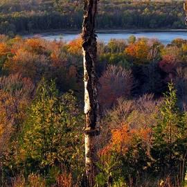 David T Wilkinson - Fall Colors at Nicolet Bay