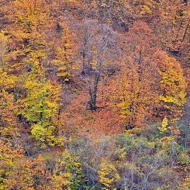 Guido Montanes Castillo - Fall colors