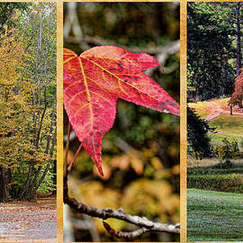 Judy Vincent - Fall Colors Triptych