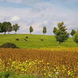 Elizabeth Stanton - Fall Colours in Ontario