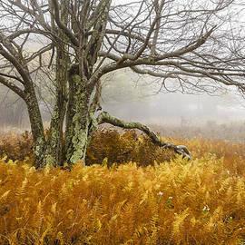 Bill Swindaman - Fall Ferns and Fog