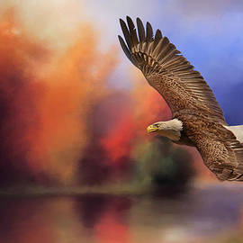 Jai Johnson - Fall Flight - Bald Eagle