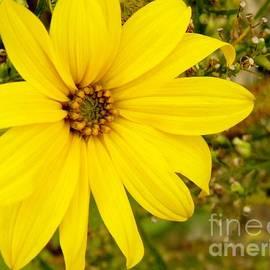 Jackie Burlingame - Fall Flower