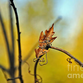 Al Powell Photography USA - Fall Foliage Foiled