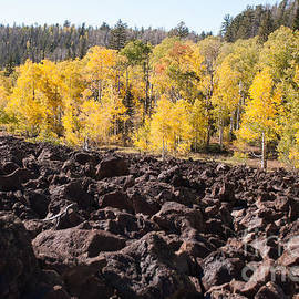 Robert Ford - Fall Glory and Fiery Past Navajo Lake Utah
