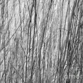 Tim Good - Fall Grass