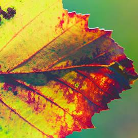 Steve Stephenson - Fall Leaf