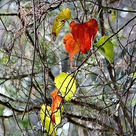 Cynthia Guinn - Fall Leaves