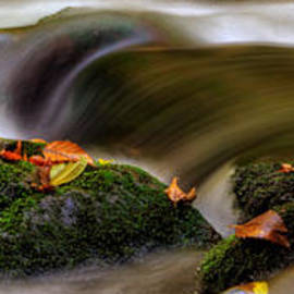 Greg Mimbs - Fall Leaves On Mossy Rocks