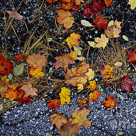 Elena Elisseeva - Fall leaves on pavement