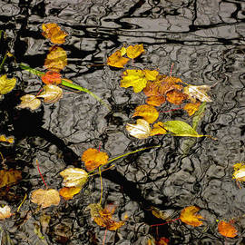 David Stone - Fall Leaves on the Water