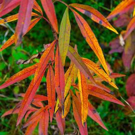 Robert Storost - Fall Leaves