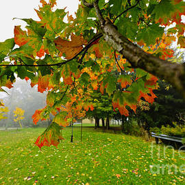 Elena Elisseeva - Fall maple tree in foggy park