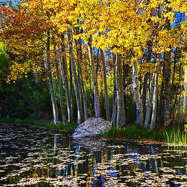 Lynn Bauer - Fall Pond in Mammoth