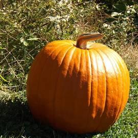 Sara  Raber - Fall Pumpkin