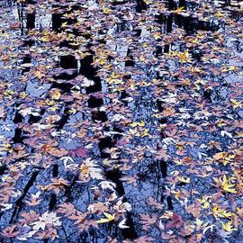 Alan L Graham - Fall Reflections