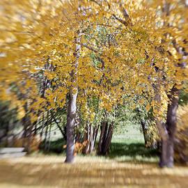 Dan Panattoni - Fall Trees through a LensBaby