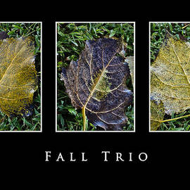 Greg Jackson - Fall Trio Edition No. 2