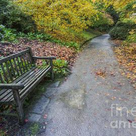 Ian Mitchell - Fall Walks