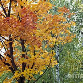 Kazimiera Wojtowicz Maslikowski - Autumn