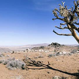 Alex Potemkin - Fallen Joshua Tree in Mojave desert