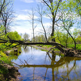 Bill Cannon - Fallen Tree over Marsh Creek