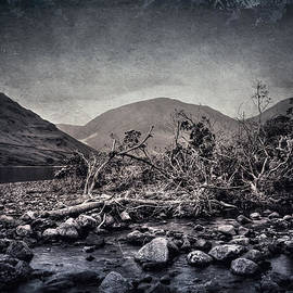 Svetlana Sewell - Fallen Trees