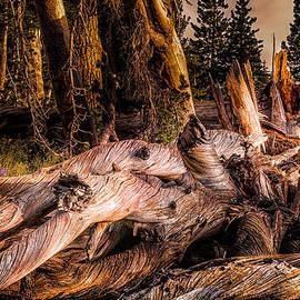 Janis Knight - Fallen White Pine