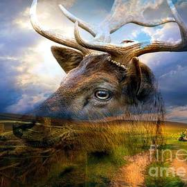 Annie Zeno - Fallow Deer In The Wilderness