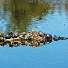 Cynthia Guinn - Family Of Turtles