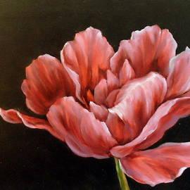 Anne Barberi - Fancy Tulip