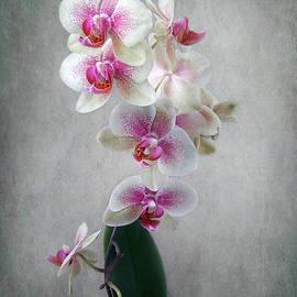 Louise Kumpf - Fancy Orchids