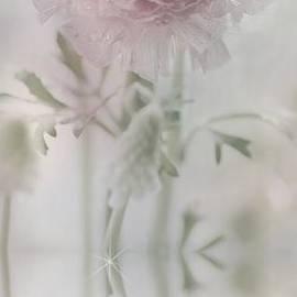 Tanja Riedel - Fantasiy image ranunculus
