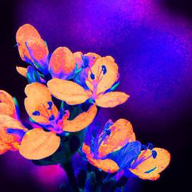 Margaret Saheed - Fantasy Flowers 13