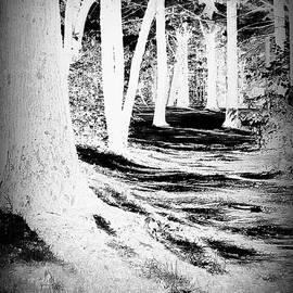 Selma Glunn - Fantasy Forest