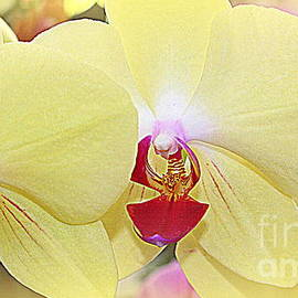 Dora Sofia Caputo Photographic Art and Design - Fantasy in Yellow - Orchids