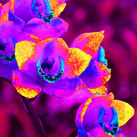 Margaret Saheed - Fantasy Orchids