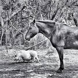 Sandra Moore - Farm Animals