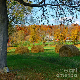 Paul Ward - Farm - Autumn Harvest