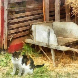 Susan Savad - Farm Cat