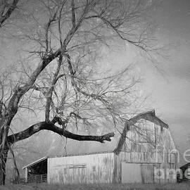 Liane Wright - Farm Life