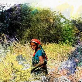 Sue Jacobi - Farmers Fields Harvest India Rajasthan 2c