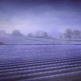 Morgan Wright - Farmland 2