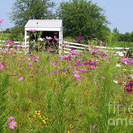 Laurie Eve Loftin - Farmscape with Cosmos