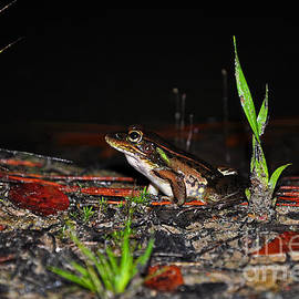Al Powell Photography USA - Fascinating Frog