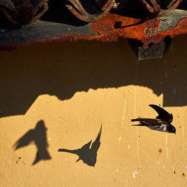 Jouko Lehto - Faster than light. House martins. Sirmione. Lago di Garda