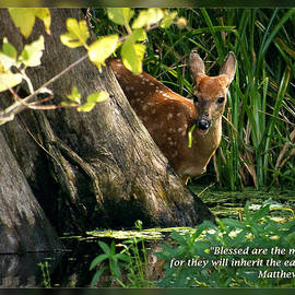 Dawn Currie - Matthew 5 5